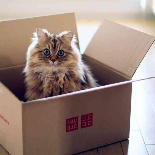 Офисный переезд — самостоятельно или мувинговая компания
