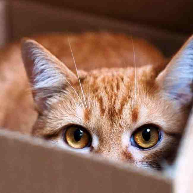 Как подготовить домашних животных к переезду